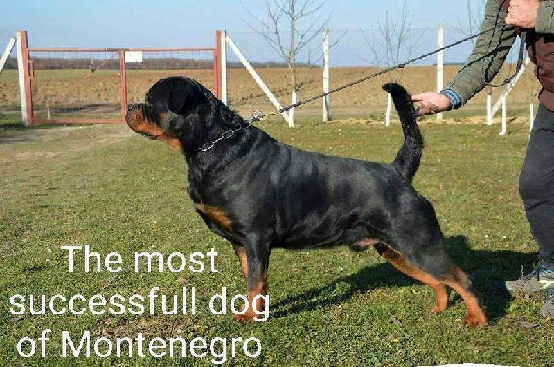 Info Dog Dog Shows